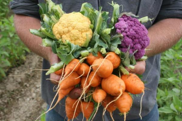 Vegetables in hand