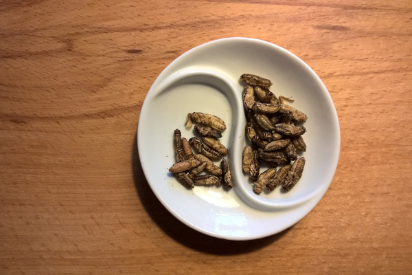 insects as a source of micronutrient nutrition
