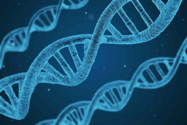 Nutrigenomics and nutrition