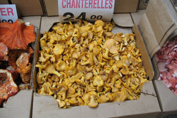 Mushrooms for sale in a market